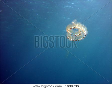 Salp Spiral