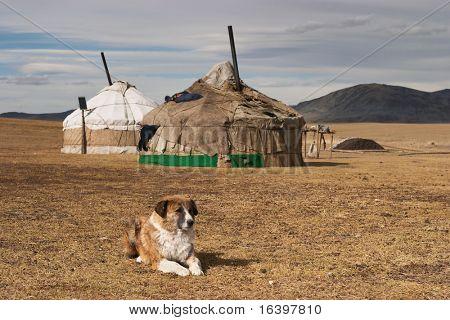 Yurta- traditional dwelling of mongolian nomads