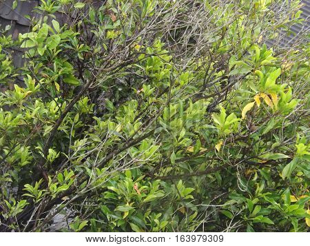plant green in merapi mouth  g r e a t