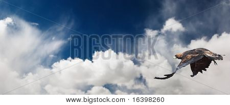Blue sky and flaying eagle