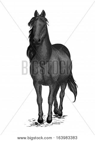 Black race horse. Arabian mustang pacing slowly. Vector emblem of horse stallion for sport horse racing. Ranch horse portrait