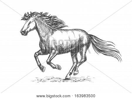 Portrait of white strong horse galloping on sport races. Vector emblem of sketched stallion mustang for horse racing, decoration engraving design