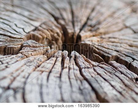 black and white of Old tree stump texture background, closeup and focus at the crack edge of the wooden