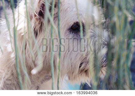 Doggy hide and seek. Dog playing hide and seek