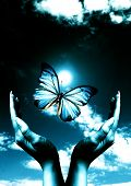stock photo of blue butterfly  - open female hands with a blue butterfly between them and a dark blue sky in background - JPG