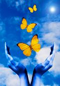 pic of blue butterfly  - open hands with butterflies flying away in the blue sky - JPG