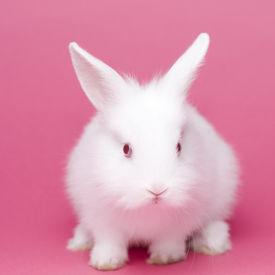 foto of baby animal  - Cute white baby rabbit - JPG