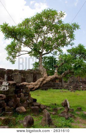 Wat Phu Champasak Temple Ruins, Laos