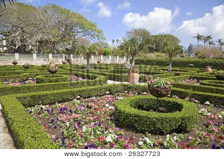 Clipped boxwood hedges are part of the formal gardens in the Bermuda Botanical Gardens.  Petunias fill in the spaces amongst the hedges.