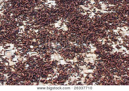 Scattered cloves drying on mat  under sun