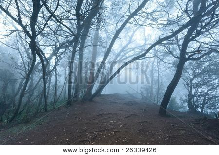Misty scary forest in thick fog