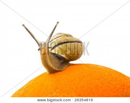Snail and orange