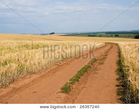 Farm in yellow field