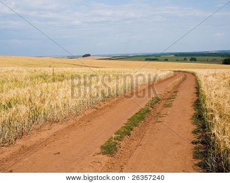 Farm in yellow field