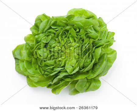 Green salad vegetable on white