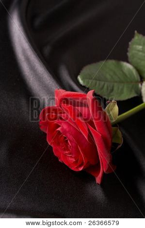 beautiful red rose on black satin
