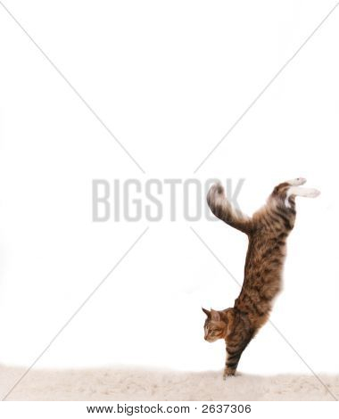 Cat Jumps