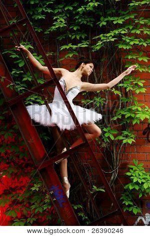 beautiful ballerina dance ballet dance