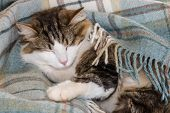 Closeup Of Tired Tabby Cat Sleeping In Blue Woollen Blanket poster