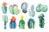 Watercolor Hand Drawn Spiky Cactus Bloom Flower. poster