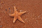 Lonely Starfish Lying On Sand As Tourist Sunbathing poster