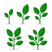 Phases Plant Growing Set On White Background. Vector poster