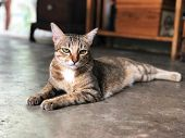 Lazy Cat Sleeping On The Cement Floor, Relaxing Time , Thai Cat On The House,a Tiger (tabby) Cat Rel poster