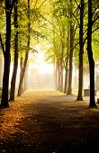 image of fall trees  - Fall - JPG