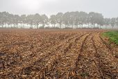Dutch Corn Stubble Field On A Misty Morning In The Fall Season. In The Background Is A Row Of Tall T poster