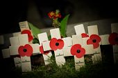 stock photo of torchlight  - flashlight beam illuminating wartime commemorative poppy crosses in a graveyard - JPG