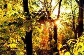 City Park, Sunbeam Through The Trees. Kiev, Ukraine, Copy Space, Closeup poster