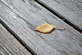 On Wooden Boards Is One Fallen Autumn Birch Leaf. Autumn Yellow Leaf Lies On The Wooden Surface. The poster