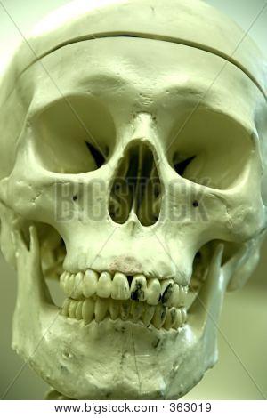 Bonehead Portrait