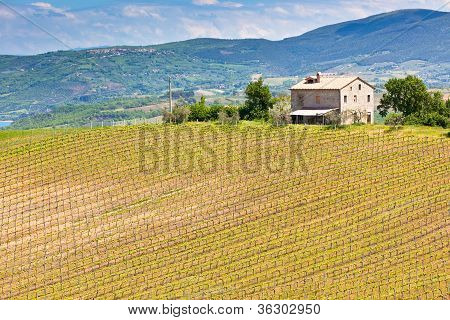 Farmhouse And Vineyard Landscape, Tuscany