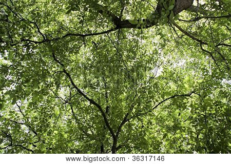 Cool shade among green leaves