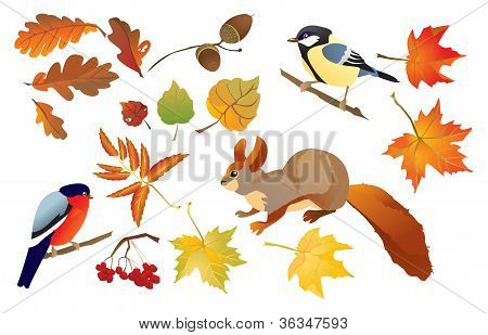 Set Of Isolated Autumn Forest Leafs And Little Birds And Animals (squirrel, Bullfinch And Tomtit)