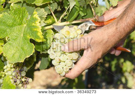 harvester hands