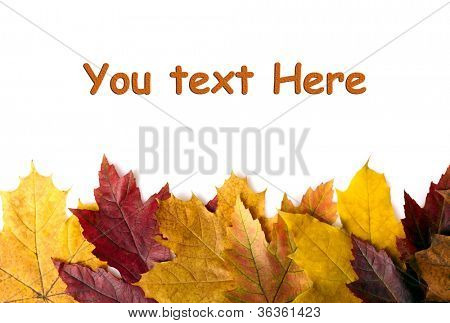 Autumn leaves background. With space for text