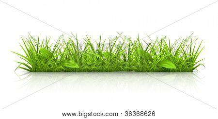 Gras, Vektor