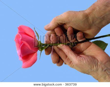 2 Hands, Rose