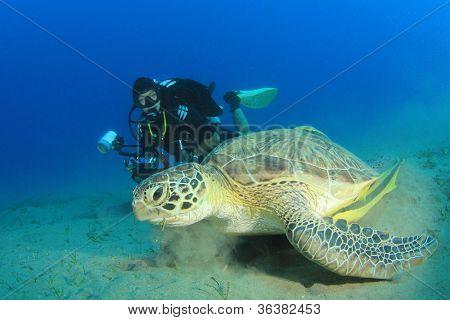 Green Sea Turtle (Chelonia mydas) and female Scuba Diver