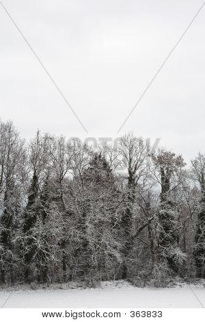 Snow Landscape #4