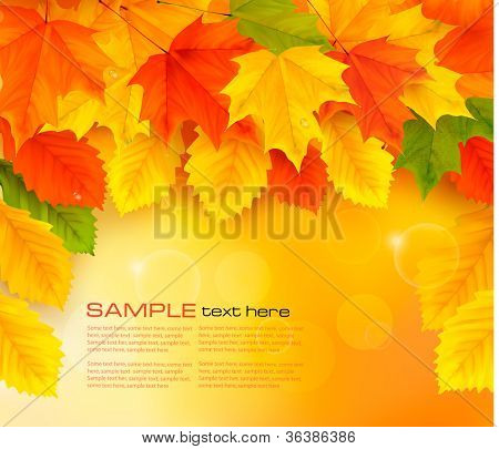 Autumn background with leaves. Back to school. Vector illustration.