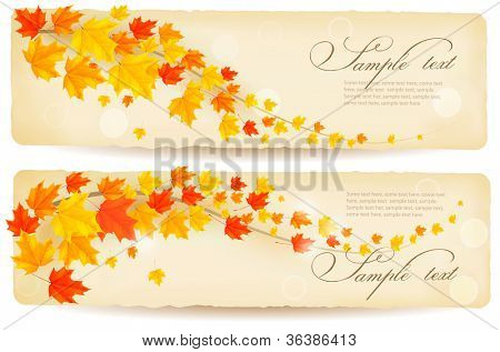 Set of autumn banners with colorful leaves. Vector.