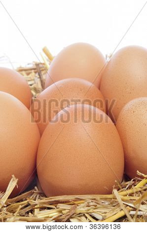 a pile of brown eggs in the nest