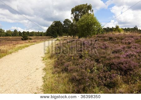 Footpath through heath landscape at Lower Saxony