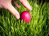 Finding an Easter Egg in the grass
