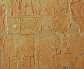foto of hatshepsut  - Relief Of Incense And Myrrh Trees Obtained By Hatshepsut - JPG