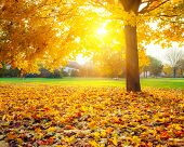 stock photo of foliage  - Colorful foliage in the autumn park - JPG