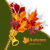 pic of zipper  - Autumn background with zipper and bright leaves - JPG